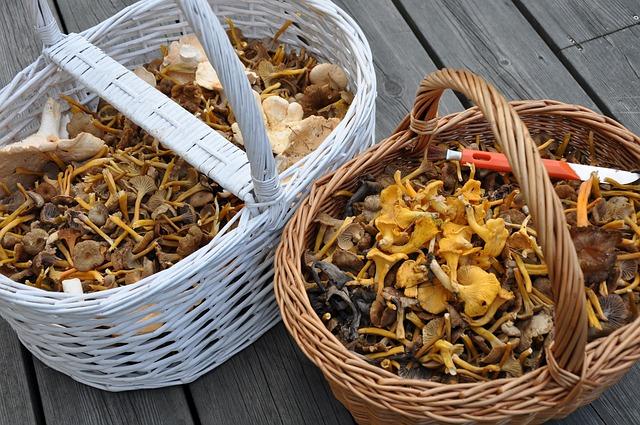 Chanterelle mushrooms in wicker baskets