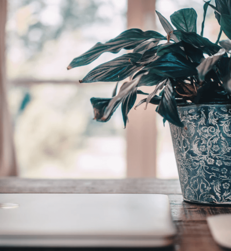 house plant in patterned pot on a wooden table next to a laptop